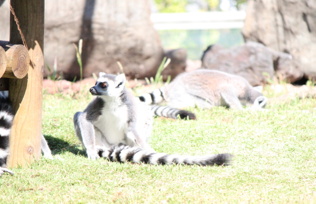 2013.10.113動物園6