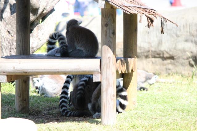 2013.10.113動物園7