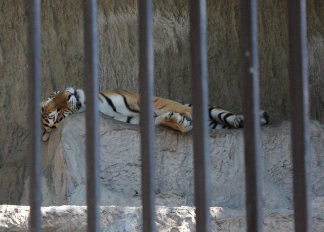 2013.10.113動物園10