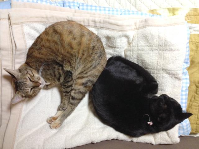 2013.10.28猫団子1