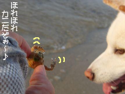 昨日海 ほれ