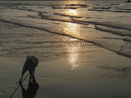 一昨日海 ここらへんに・・・