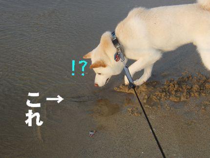 一昨日海 ざぶーん!?