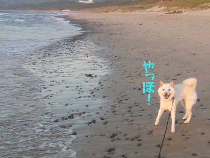 あらぶる海 やっほやっほ!