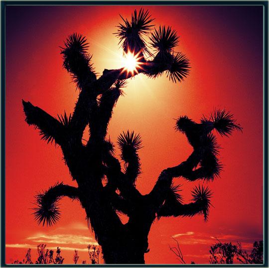 joshua-tree[1]