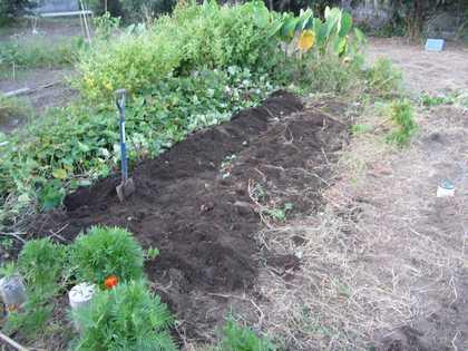 イモ掘り 2