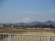 伊勢原から見た富士山