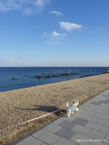 2013 大洗散歩 003