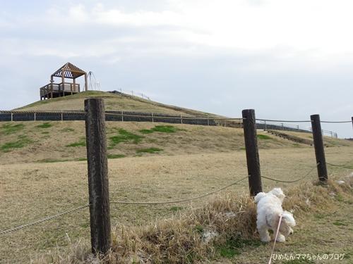 2013 鹿島灘海浜公園 004