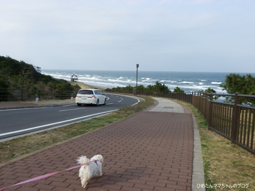 2013 鹿島灘海浜公園 006