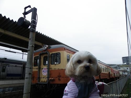 2013 阿字ヶ浦フェス&駅 012