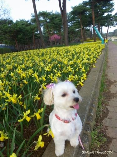 2013 海浜公園散歩(3月) 017