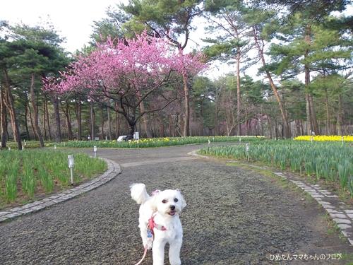2013 海浜公園散歩(3月) 021