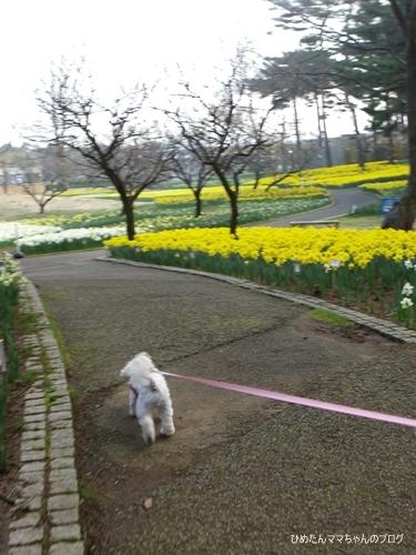 2013 海浜公園散歩(3月) 030