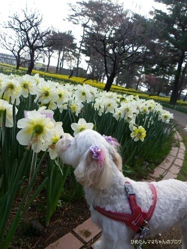 2013 海浜公園散歩(3月) 031