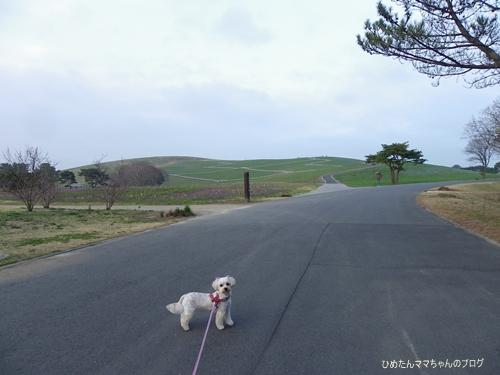 2013 海浜公園散歩(3月) 044