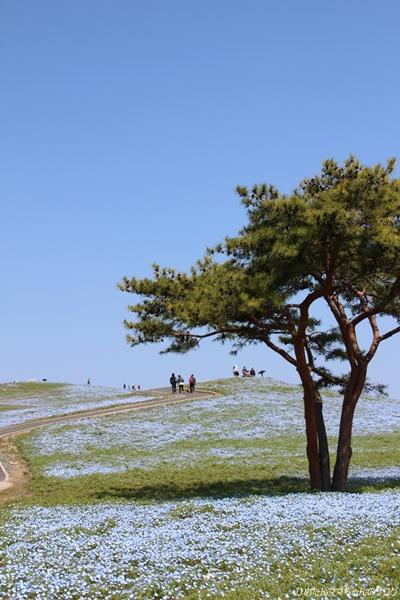 2013 海浜公園(チューリプ) 010
