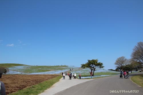 2013 海浜公園(チューリプ) 006