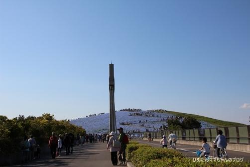2013 海浜公園(ネモフィラ) 005