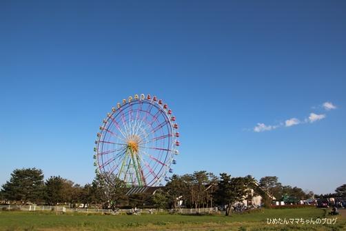 2013 海浜公園(ネモフィラ) 039