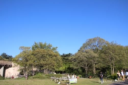 2013 海浜公園(ネモフィラ) 024