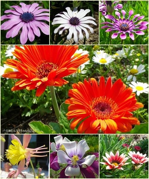 初夏の花達