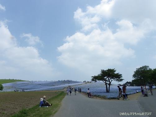 2013 海浜公園(ポピー) 012