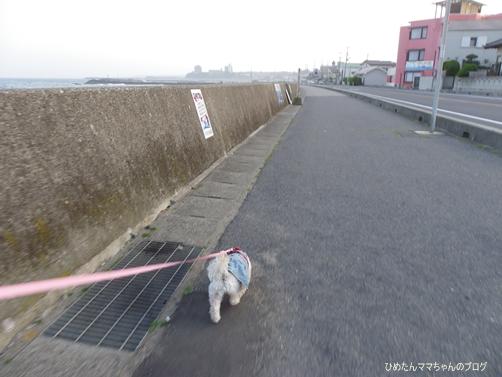 2013 海散歩(5月) 001