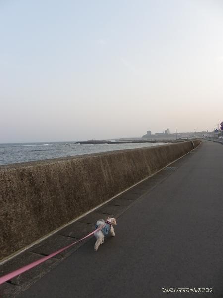 2013 海散歩(5月) 003