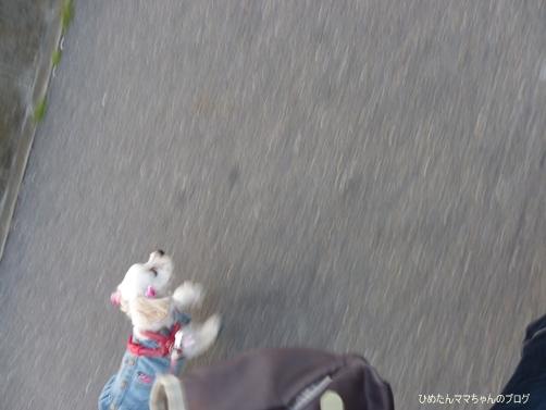 2013 海散歩(5月) 010