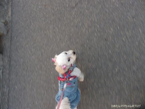 2013 海散歩(5月) 009
