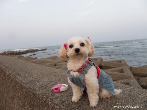 2013 海散歩(5月) 011