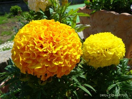 2013 お花 050