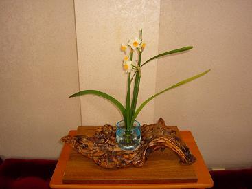 花台-生花