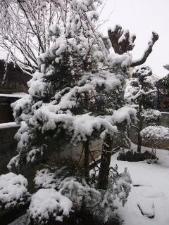 2012-02-29 2014.2.29yukinohi 001 (240x320)