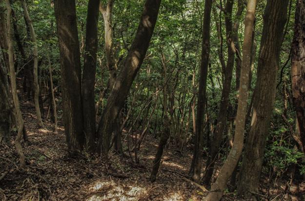鵜原用木写真