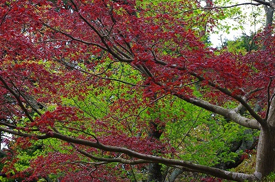 s-鎌倉散歩1