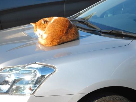 通りすがりに見かけた猫(718)