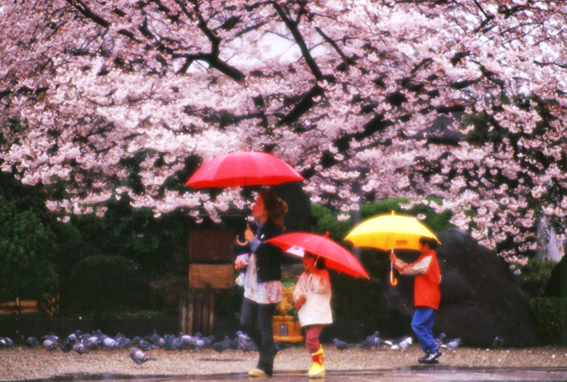 2004「雨宿り」