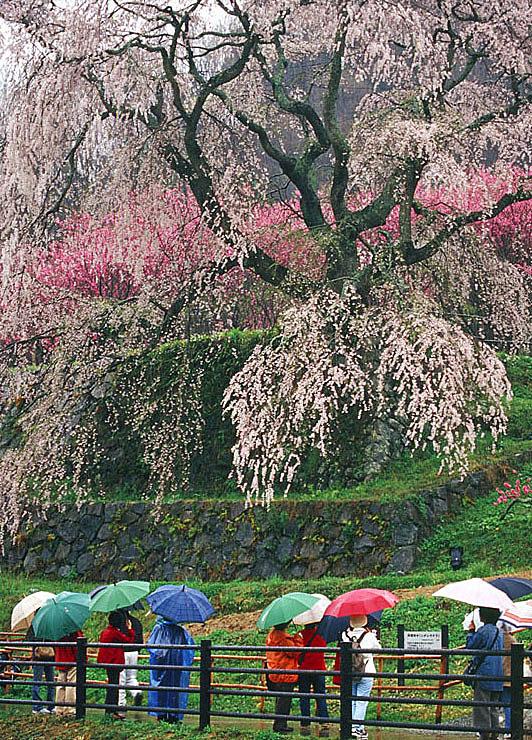 2005「雨天決行」