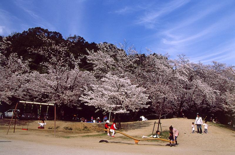 2008「お花見日和」