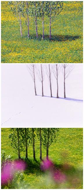 02野の花03 04 09