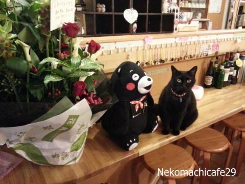 最終日の猫スタッフたち