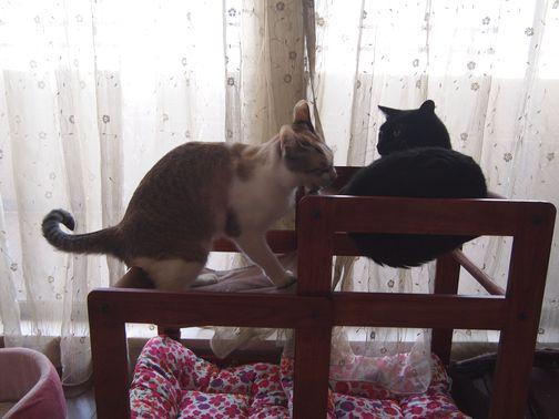kurokohaku_20131019214029621.jpg