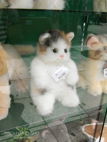 これが…ネコ…だと…