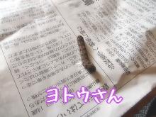 IMG_9133_20141023171639bed.jpg