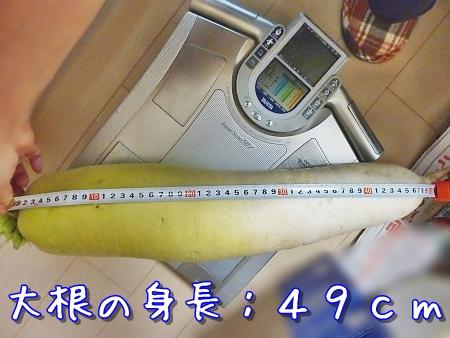 P1300943.jpg