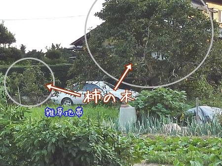 t_P1260481.jpg