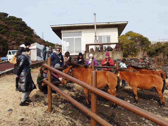 140127-yonaguniuma.jpg
