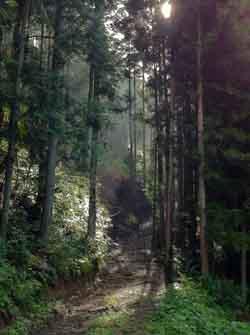 120812koneko_forest.jpg